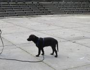 20151011 DogsandPeople 008