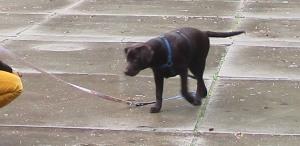 20151018 puppyles bos 011
