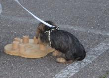 20151029 puppytraining 009