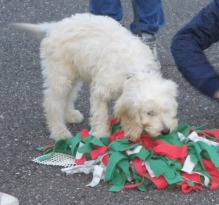 20151029 puppytraining 010