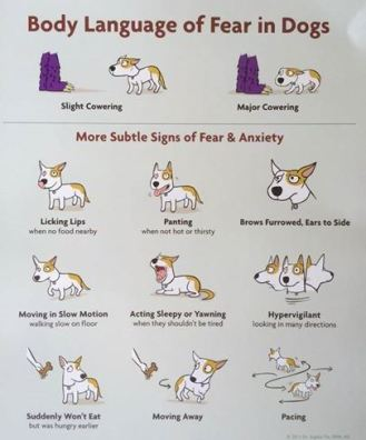 poster angst honden