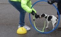 kind-en-hond-2