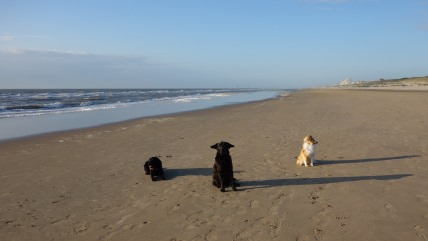 Lotte, Frank en Amy
