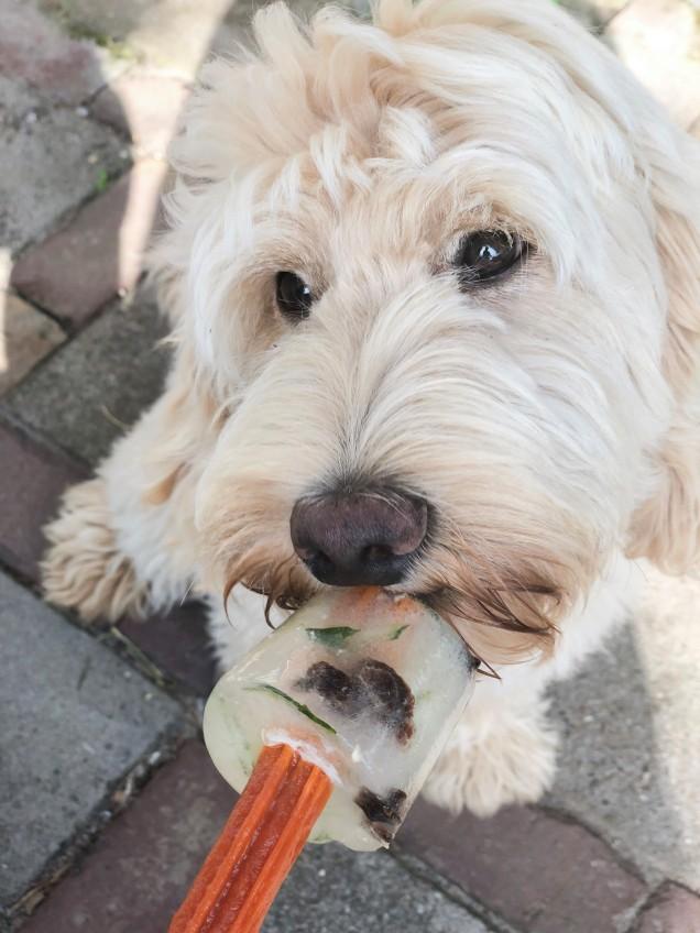 hondenijs 2