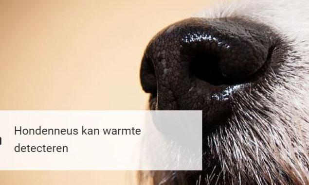 hondenneus dogzine